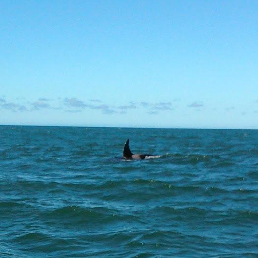 2015-04-03 Orcas en Cabo Corrientes 1