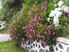 Photo: Цветы на улице/Flowers
