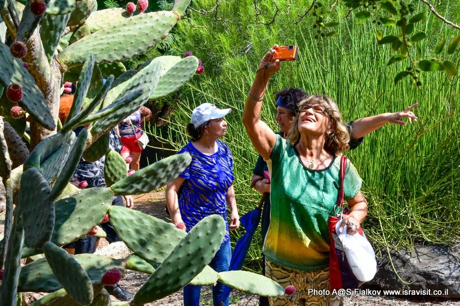 Экскурсия по Тель-Авиву. В саду кактусов парка Яркон. Гид в Тель-Авиве Светлана Фиалкова.