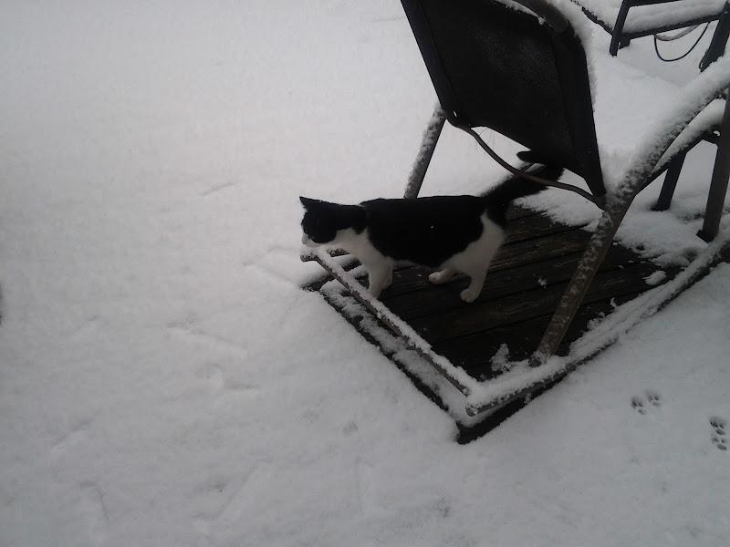 Photo: Snow 2/11/12