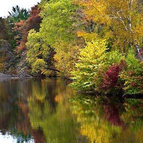 by Reva Fuhrman - Landscapes Waterscapes ( fall water trees reflection color,  )