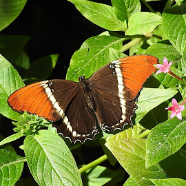 Butterfly in the garden by Mary Gallo - Animals Insects & Spiders ( nature, butterfly, garden )