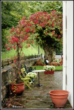 Photo: La enredadera es la primera en avisarnos del otoño. Hotel Rural Irigoienea