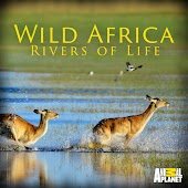 Wild Africa: Rivers of Life