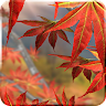 fishnoodle.autumn_free