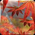 Autumn Tree Free Wallpaper Icon