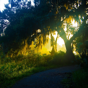Morning walk by James Newberry - Landscapes Forests ( nature, oak, outdoor, trail, morning, light, rays )