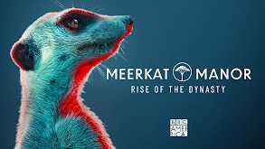 Meerkat Manor: Rise of the Dynasty thumbnail