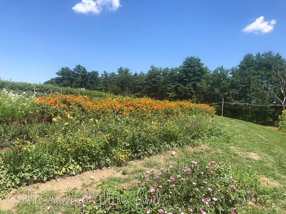 Ferjulian's Farm - pick your own flowers