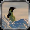 Emperor Penguin Live Wallpaper icon