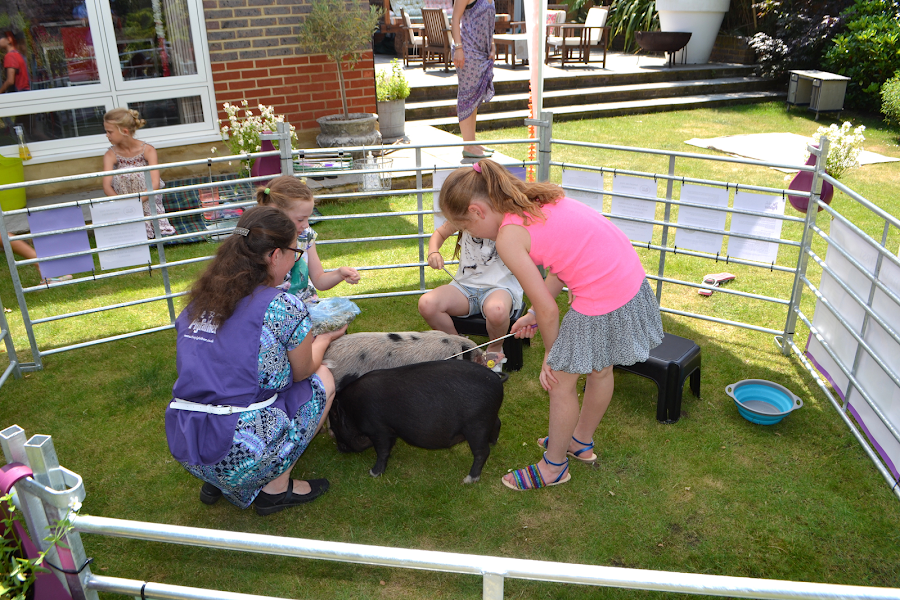children brushing micro pigs