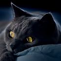 free cat backgrounds icon