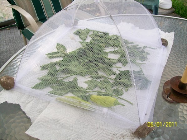 You can put the peppers in something like this to dry them also. These...