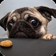 Pug Dog Pack 2 Live Wallpaper apk