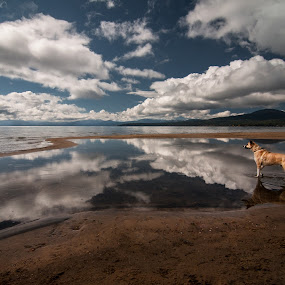 The photographers side kick Walking on Clouds  by Michael Keel - Landscapes Travel ( vito, dogs, lakes, husky, kings beach, lake tahoe,  )
