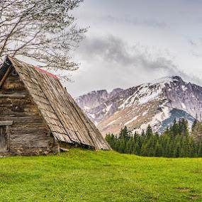 Mountain Hut by Dejan Dajković - Landscapes Mountains & Hills ( clouds, wooden, mountain, tree, grass, hut, green )