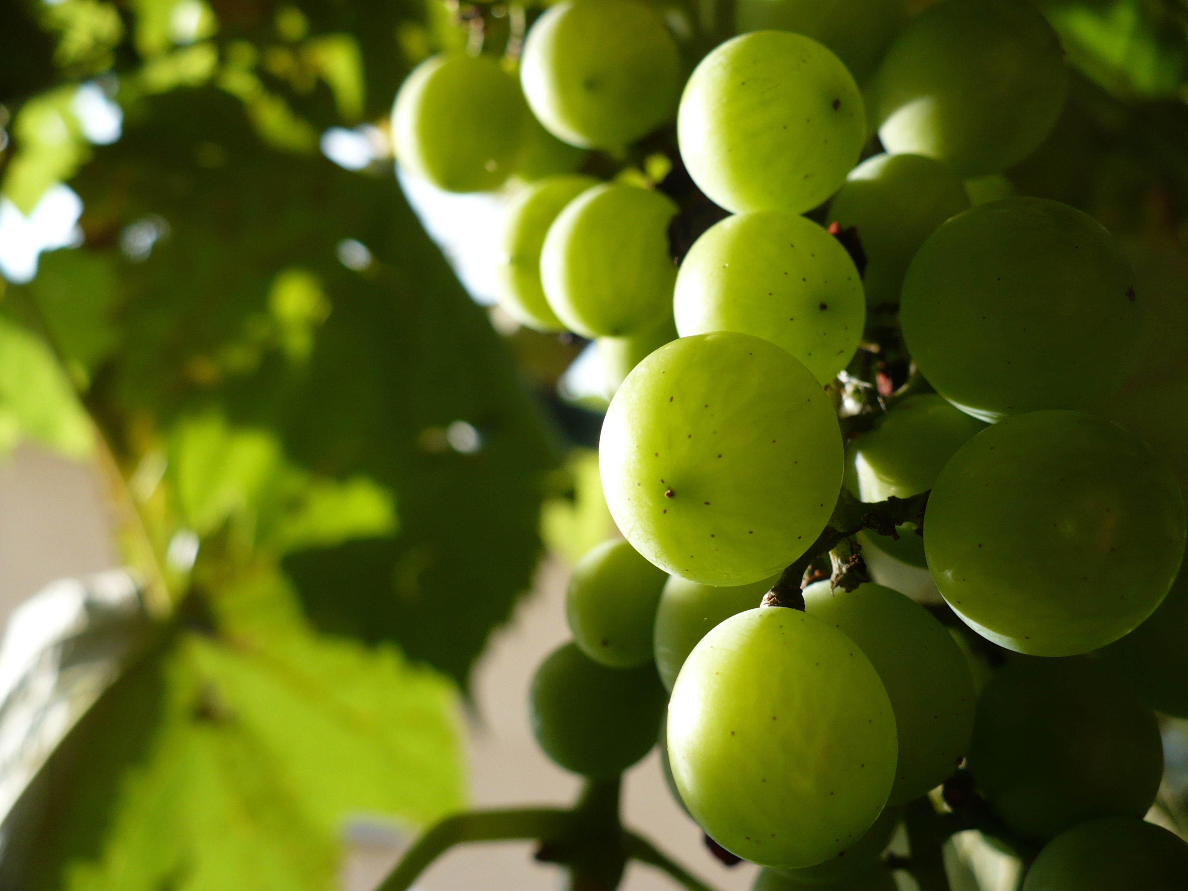 uva di fabiobaldi