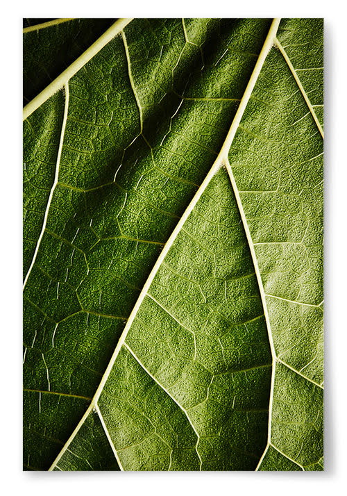 Poster Löv Närbild