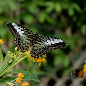 Butterfly by Greg Bennett - Animals Insects & Spiders ( butterfly, nature, butterfly house, butterflies, flowers, flower,  )