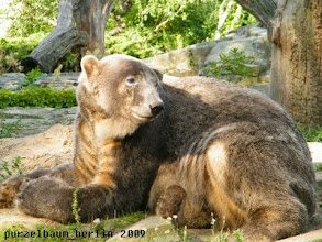 Photo: Zeit fuer eine kurze Pause, meint Knut ;-)