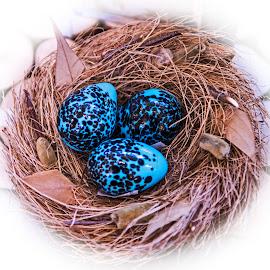 Nesting by Will McNamee - Artistic Objects Still Life ( patty_j_ball@hotmail.com; donaldbarber11@msn.com; donaldbarber11@msn.com; d3a1@aol.com;  postholes2002@yahoo.com;,  )
