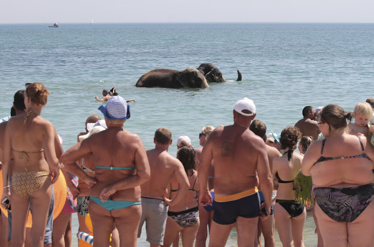 People watch elephants from a local circus taking a regular bath in the waters of the Black Sea on a hot summer day in Crimea.