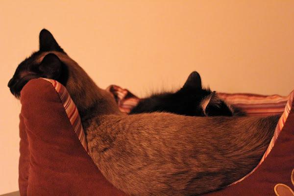 Cats di AlexSandra