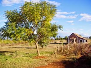 Photo: début d'hiver, le jacaranda prend des couleurs or