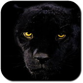 Panther Wallpapers