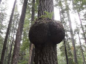 Photo: Butt Tree