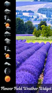 květina pole počasí widget - náhled
