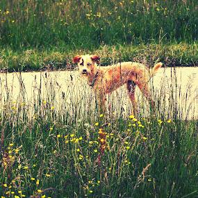 Gook and barberry by Kaja Radošević - Animals - Dogs Portraits