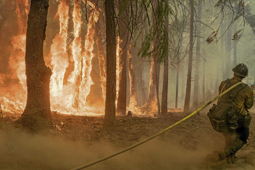 A firefighter works to control a fire near the Yosemite National Park in the US on August 6 2018. Picture: USFS/YOSEMITE NATIONAL PARK/HANDOUT VIA REUTERS