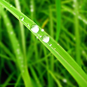 by Ankit Balgude - Nature Up Close Leaves & Grasses