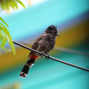 Bird by Sudipta Ghosh - Animals Birds ( bird )