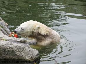 Photo: Nix mehr da, widmet sich Knut dem Kuerbis ;-)
