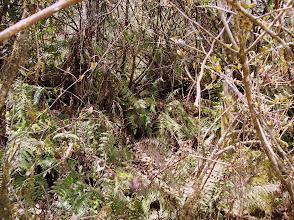 Photo: erst jetzt merken wir: Wir haben und verlaufen und stecken plötzlich im weglosen Dschungel