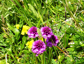 Photo: La fotocamera ha smesso di funzionare, così ci siamo trasferiti sui monti di Castelluccio a contemplare un pò di fiori