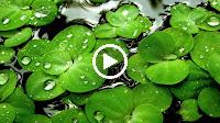 Thì Thầm Mùa Xuân (Remix) – Nhạc Sống Organ