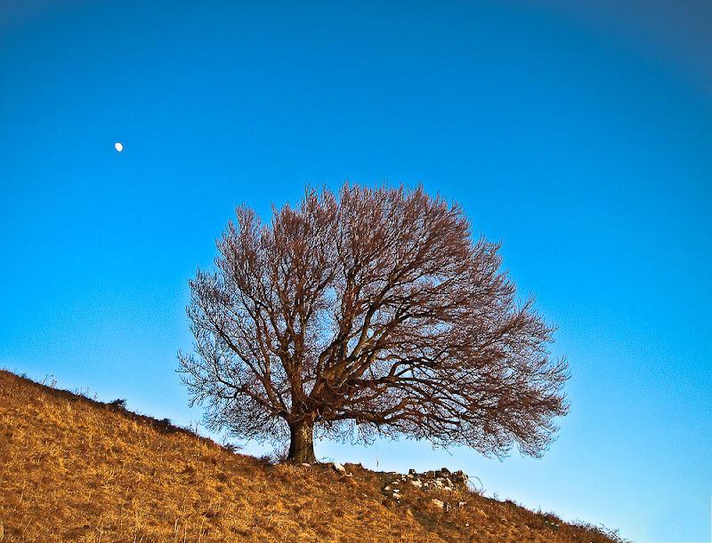 l'albero e la luna di Fracaio