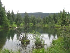 Photo: Bullmoose Creek