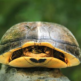 One Eye by Muhammad Buchari - Animals Reptiles