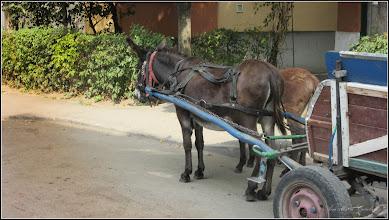 Photo: Măgărușul lui Ianoș - pe Str. Nuferilor - 2017.09.02