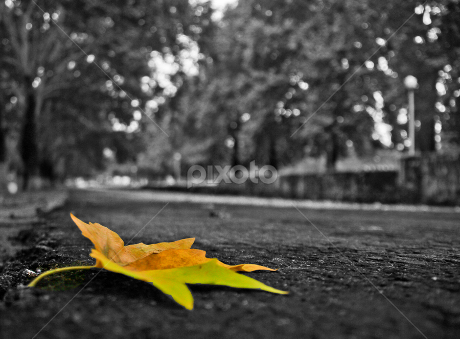 Importance of Autumn.. by Asmar Hussain - Nature Up Close Leaves & Grasses ( pwcfallleaves, leave, autumn, autumn is coming, colorful autumn, pwcautumn, fallen leave, alone on road,  )