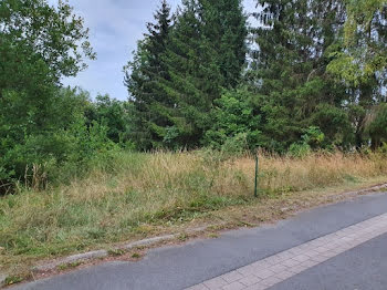 terrain à Dehlingen (67)