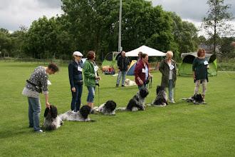 Photo: so - einmal ein 'gesittetes' Gruppenfoto (Dollie, Debbie, Danoky, Dobby, Oscar und Barney)