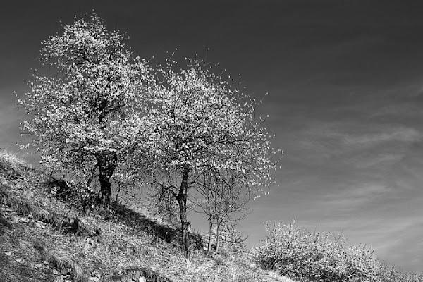 Springtime di Alessandro Remorini