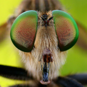 Eyes Only by Iwan Ramawan - Animals Insects & Spiders