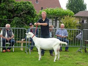 Photo: Klasse 2: 1 jarige witte geiten. 1a. Joke 52.
