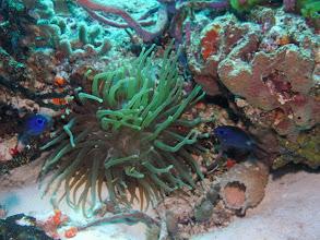 Photo: Sea Anenome